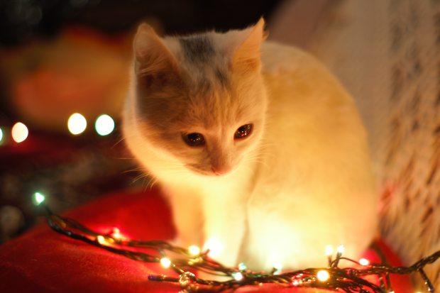 adorable-animal-animal-photography-735423